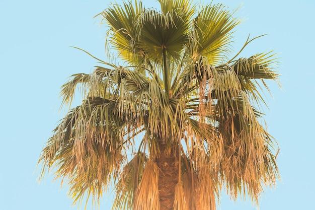 Palmboom tegen de blauwe hemel.