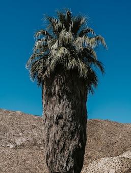 Palmboom tegen de blauwe lucht