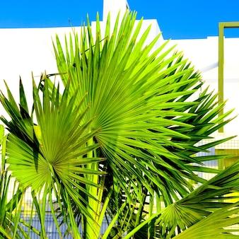 Palmboom tropisch ontwerp minimaal