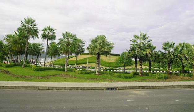 Palmboom tuin