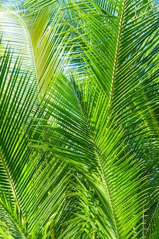Palmboomtak in de tropen onder de blote hemel.