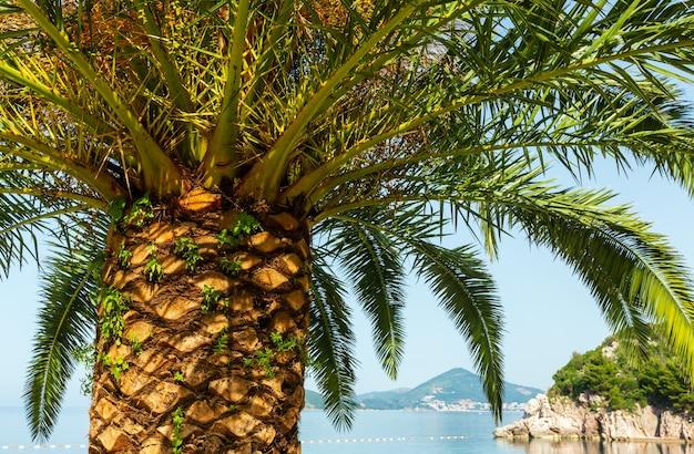 Palmboomtop (close-up) op de achtergrond van de zeekust (montenegro, budva)