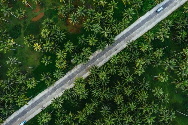 Palmboomwildernis in de filippijnen. concept over reislust tropische reizen.