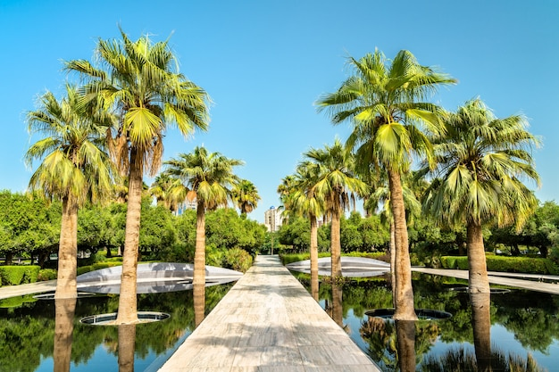 Palmbos bij al shaheed park koeweit-stad