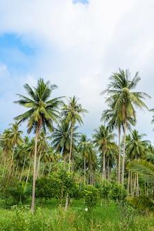 Palmbosje. palmbomen in de tropische jungle. symbool van de tropen en warmte