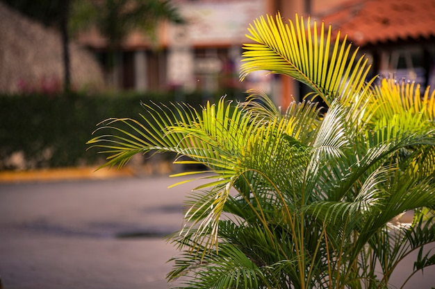 Palmdetail bij susnet in bayahibe, dominicaanse republiek