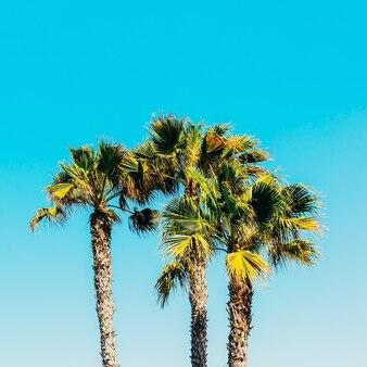 Palmen. canarische eilanden. minimaal