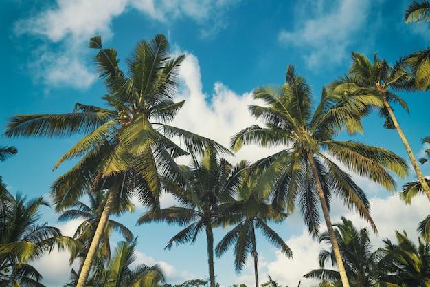 Palmen en de blauwe bewolkte achtergrond van het hemel tropische landschap