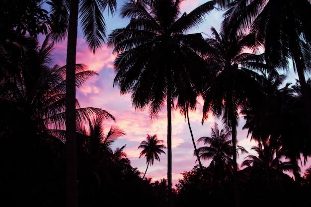 Palmen en lucht