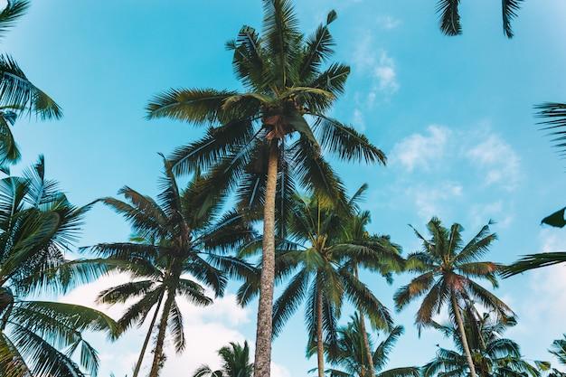 Palmen en mooie bewolkte hemel, tropische die achtergrond op bali wordt genomen