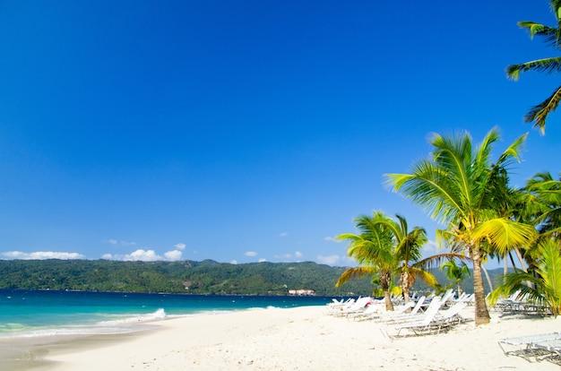 Palmen en zee strand