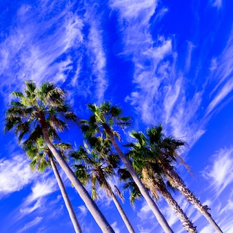 Palmen in de blauwe lucht. minimale tropische kunst