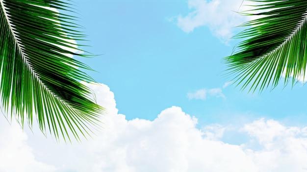 Palmen kokosnotenblad op blauwe hemel