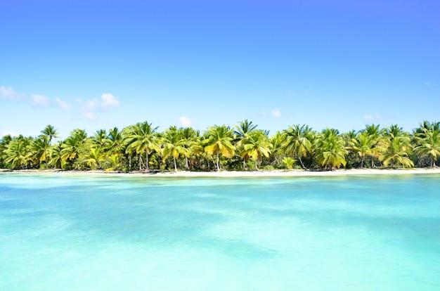 Palmen op een strand in het caribisch gebied.