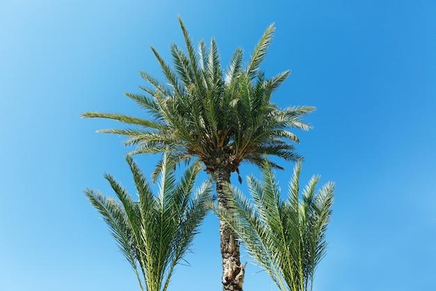 Palmen tegen blauwe hemel