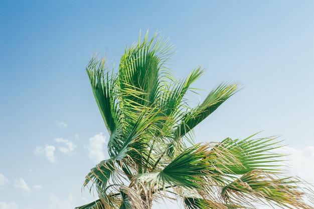 Palmenbomen onder blauwe hemel