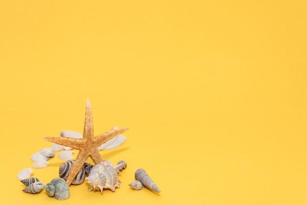 Palmentakken met zeester en zeeschelp op gele achtergrond
