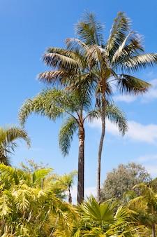 Palmentuin onder een blauwe hemel