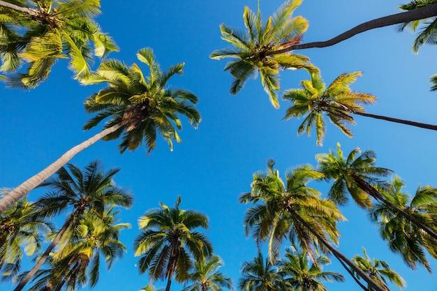 Palmschaduw op het zandstrand