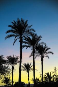 Palmsilhouetten tegen de hemel tijdens zonsondergang.