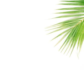 Palmtak op witte achtergrond wordt geïsoleerd die. plat lag, bovenaanzicht