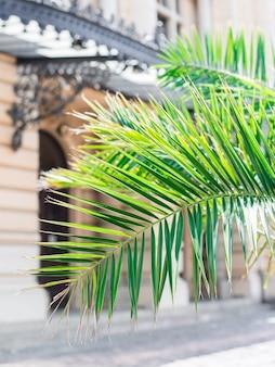Palmtakken bij de ingang van het hotel. tropische palmbladeren en gebouwen