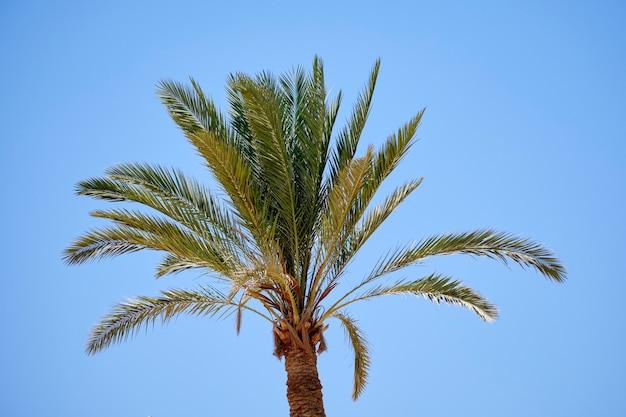 Palmtakken boven de blauwe lucht bij zonnig weer.
