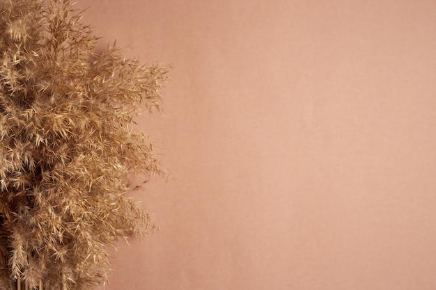 Pampagras op een beige achtergrond. kopieer ruimte