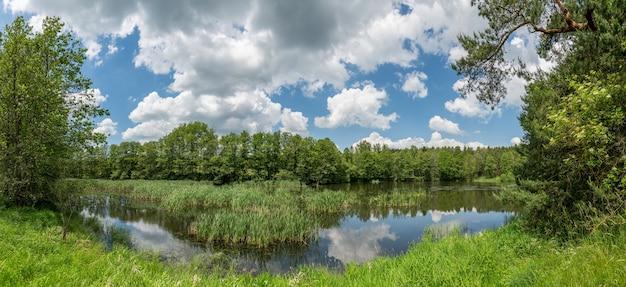 Panorama kleine vijver met riet in bos, witte wolken op blauwe hemel