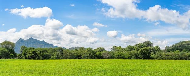 Panorama landschapsmening van groen grasveld agent blauwe lucht op het platteland van thailand