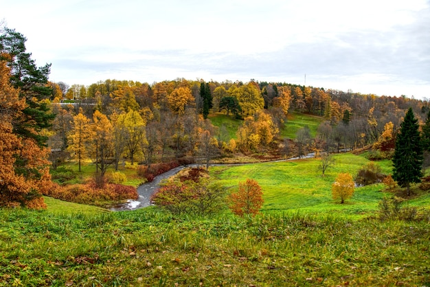 Panorama van een gemengd bos op zonnige herfstdag.