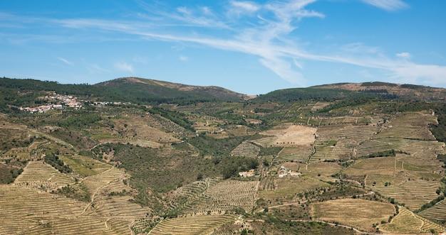 Panorama van een groot stuk land beplant met wijngaarden in de bergen van portugal