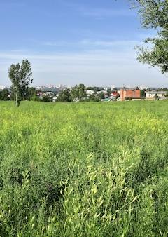 Panorama van een grote stad met hoge huizen aan de horizon een groene weide