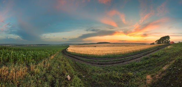 Panorama van een tarweveld
