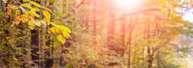Panorama van herfstbos met gele bladeren op een tak op de voorgrond tijdens zonsondergang