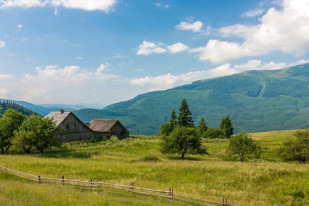 Panorama van karpatische bergen in de zomer met eenzame pijnboomboom vooraan en gezwollen wolken en bergranden.