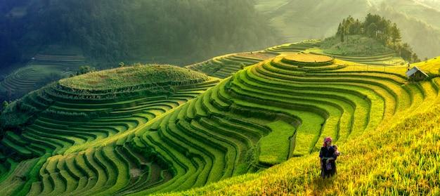 Panoramasymbool van vietnamese rijstterrassen, mu cang chai. yenbai, vietnam.