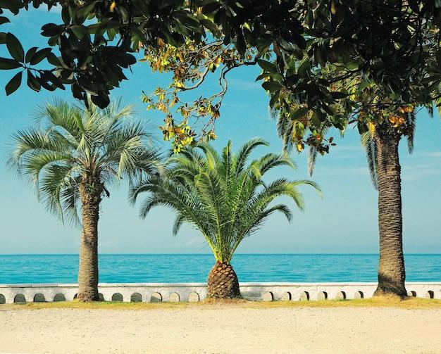Panoramisch schilderachtig uitzicht op het strand met palmbomen op de achtergrond van de blauwe zee
