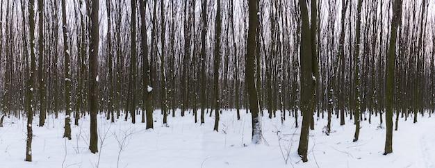 Panoramisch uitzicht op de sneeuw in het bos