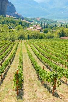 Panoramisch uitzicht op de wijngaard - landelijk landscpe