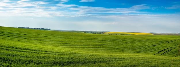Panoramisch uitzicht op groene heuvels van veld met wintertarwe