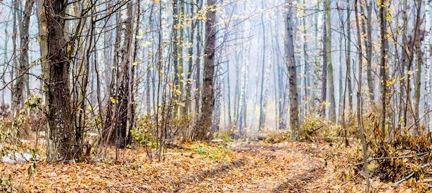 Panoramisch uitzicht op het herfstbos met een weg tussen de bomen_