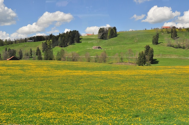 Panoramisch uitzicht op het platteland van verse groene heuvels in het voorjaar