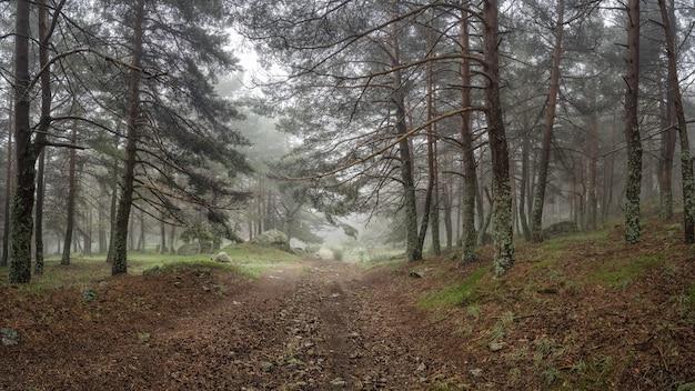 Panoramisch van betoverd bos met stenen pad dat naar de open plek leidt. morcuera.