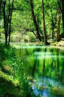 Panoramisch van het bos met rivier als gevolg van de bomen in het water.