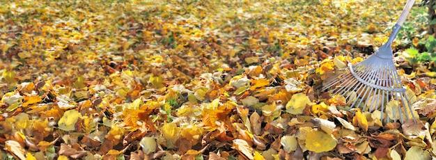 Panoramisch zicht op gouden blad op de grond in een tuin en hark aan de rechterkant