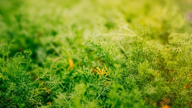 Panoramisch zicht op groene planten