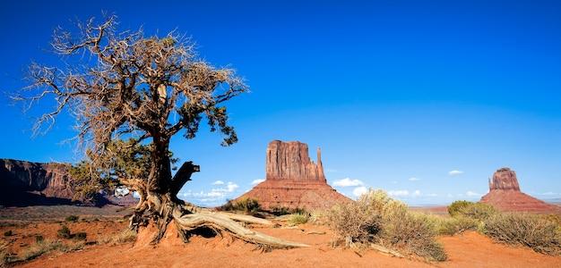 Panoramisch zicht op monument valley en boom, verenigde staten
