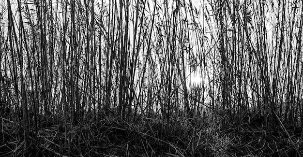 Panoramische opname in grijstinten van hoge takken van planten