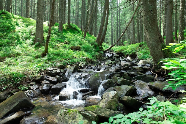 Panoramische prachtige diepe woudwaterval